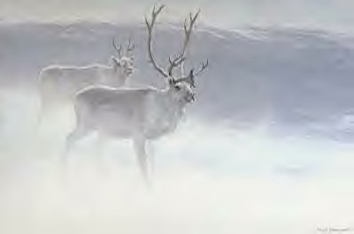 Peary - Caribou in the snowstorm